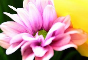 lavender-flower-1380607762s6j