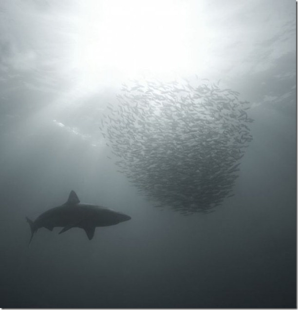 swimming-with-sharks-21