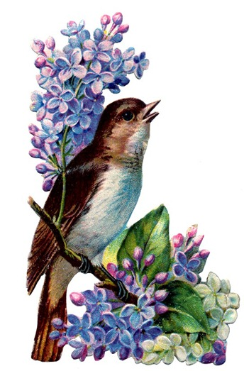 birds and flowers vintage image graphicsfairy3b