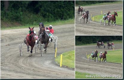 harness racing6
