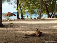 Känguru beim chillen vor unserem Zimmer