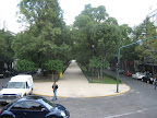 The main streets in Condesa have a wide park down the middle of them