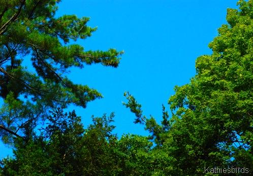 3. blue sky-kab