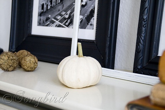 Small White Pumpkin