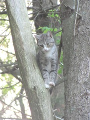 princess stuck in tree June 8 2013.1