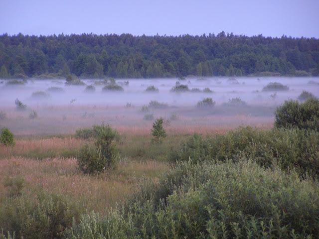 туман_болото.JPG