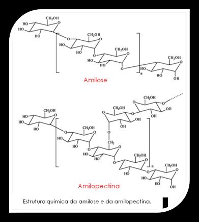 Amilose e amiloectina