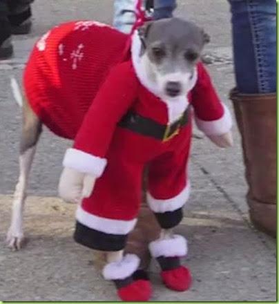 Jimmy-Kimmel-holiday-pets