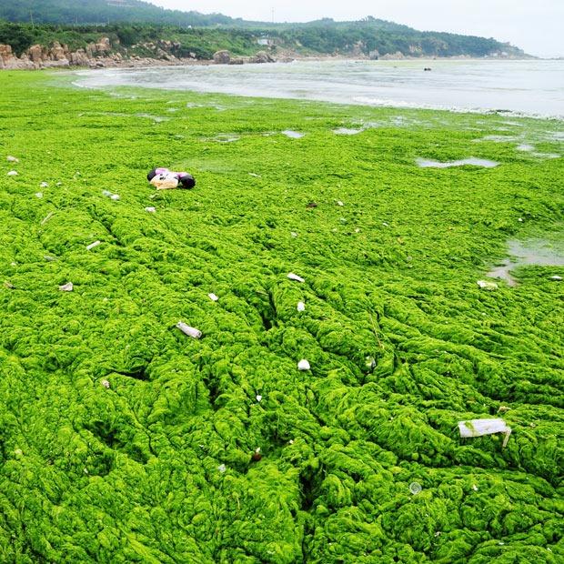 chinese-algae14