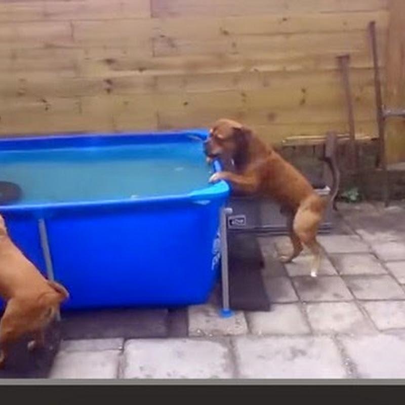 Bulldogs συνεργάζονται για  ένα παιχνίδι