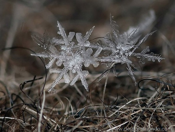 flocos-de-neve-macro-snowflakes-macro-photography-andrew-osokin-desbaratinando (3)