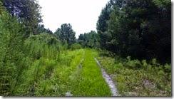 Horse trail back
