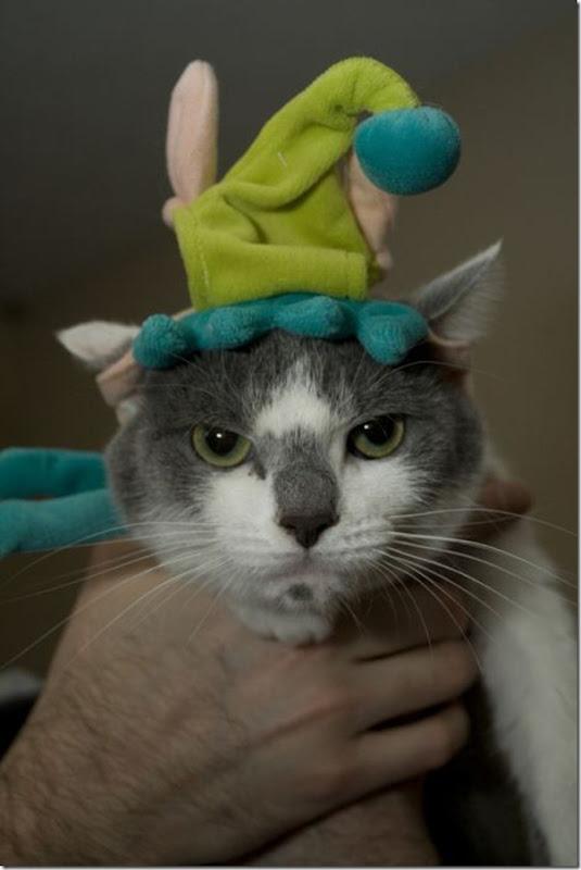 Gatos odeiam o natal (2)