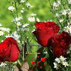 angkorsite_flower_1 (118).jpg