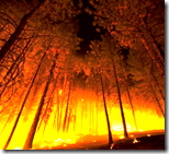 [forest fire]