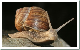 snail1