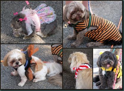 pet contest collage