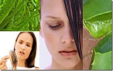Remedios Caseros para el cabello con Aloe Vera1