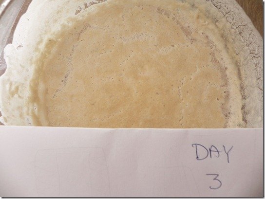 sourdough-starter-2