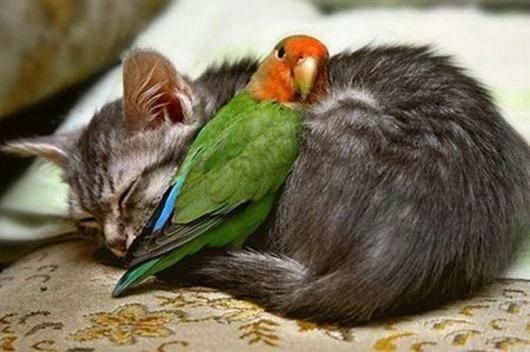 1333359612_animals-1