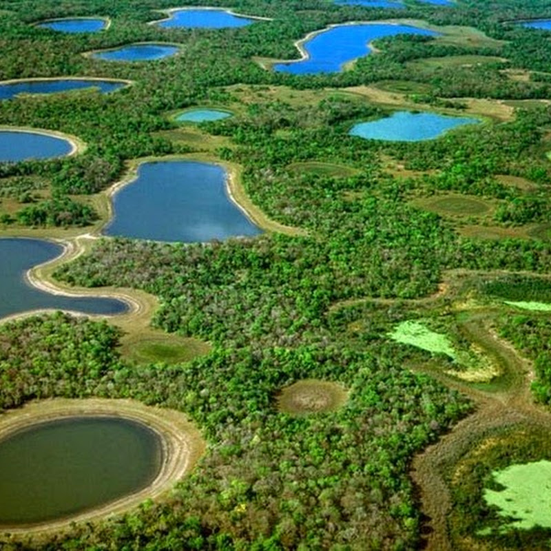 Pantanal, The World's Largest Freshwater Wetland