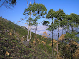The end of the trees on Ili Boleng (Daniel Quinn, August 2010)
