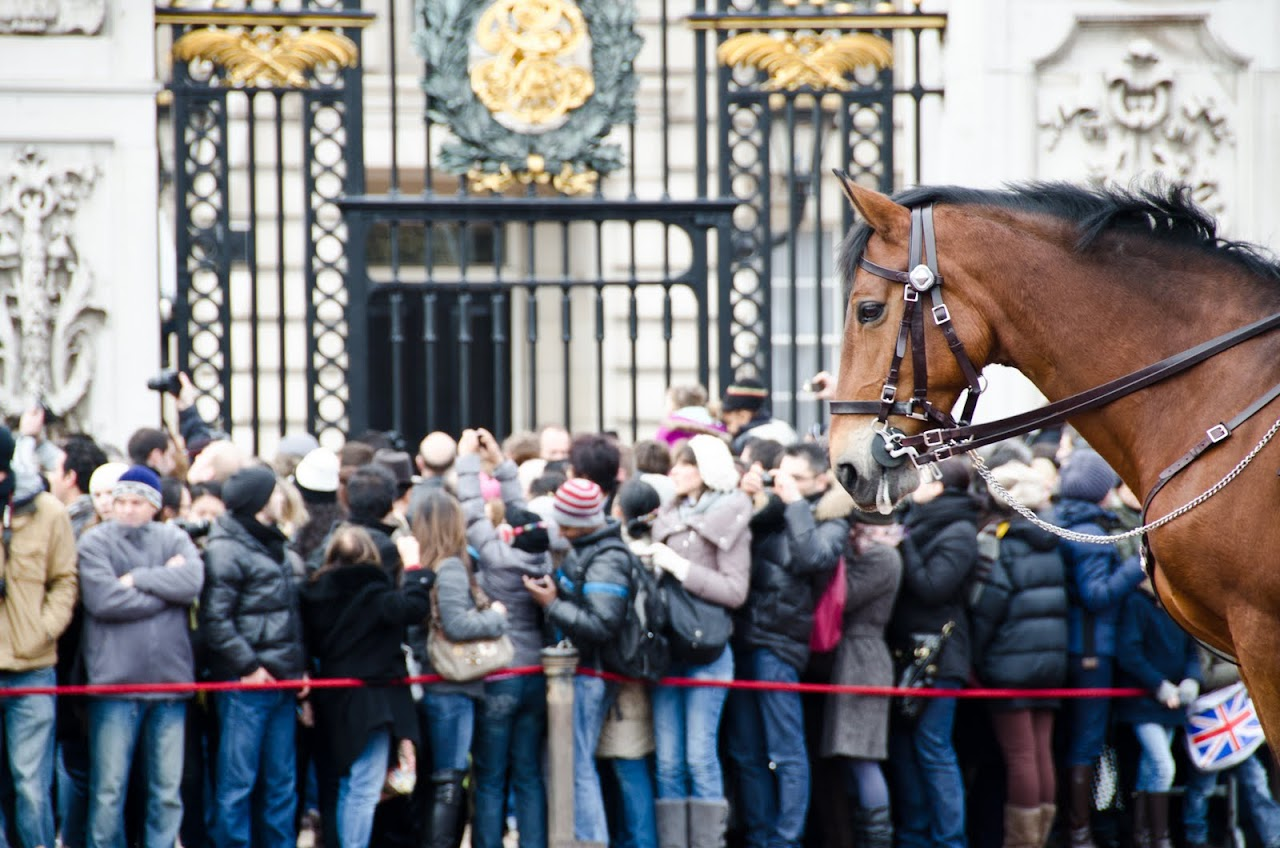 Horse at changing of the guards