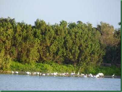 Eco Pond 001