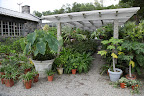Horrors!  Look at all of Martha's tropical plants under the shade pergola.