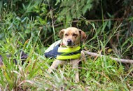 Dogs Trekking 6 (216_1) (18)