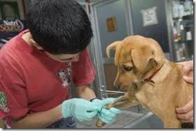 Cronograma de mayo de esterilizaciones quirúrgicas gratuitas para perros