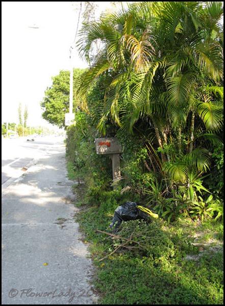 06-08 jungle9