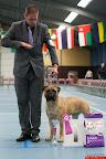 20130511-BMCN-Bullmastiff-Championship-Clubmatch-1833.jpg