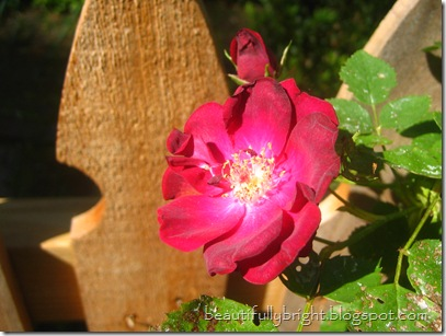 16} flower
