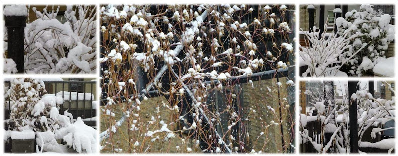 Snowy-plants-1-opt
