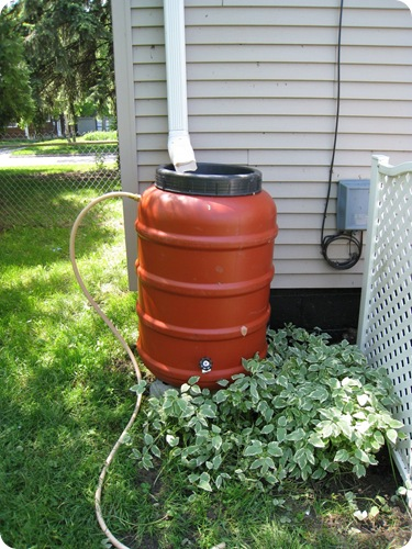rainbarrel_plants_athomewithh