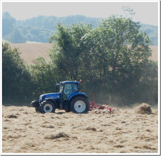 SAM_2175 Making hay...