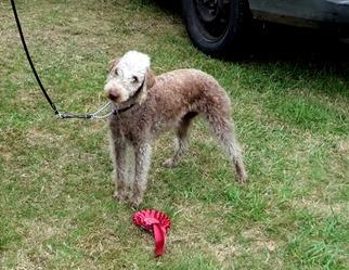 Dog Show Long Itchington