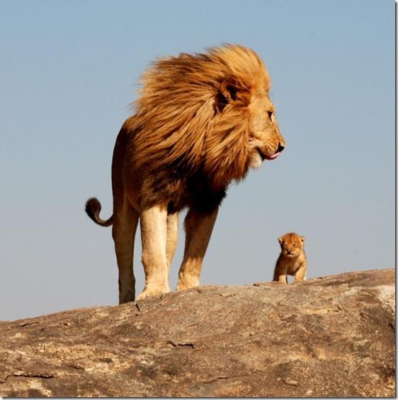 El Rey León,The Lion King,Simba (111)