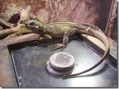 2011.11.25-001 dragon de Saïfin