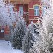 снежная зима 08-09 года (3).JPG