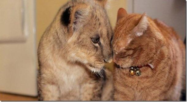 funny-animals-cute-7