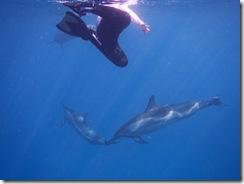 イルカ ハワイ島