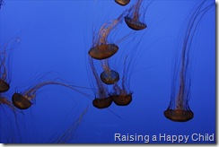 July16_Jellyfish