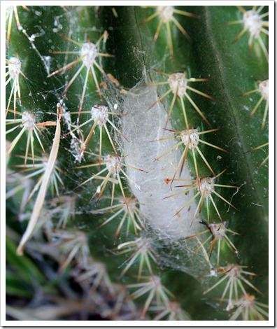 130523_plants-with-cobwebs_02
