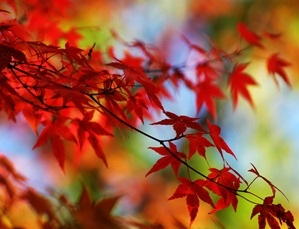 red-autumn-leaves-beautiful