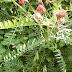 Viciagiganteahna20120505_106