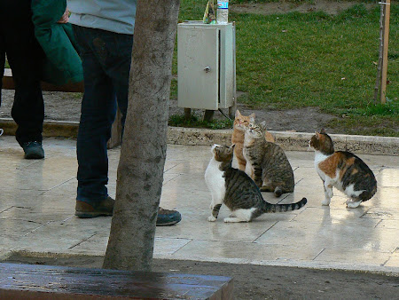 Sights of Turkey: Turks have a lot of cats