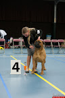 20130510-Bullmastiff-Worldcup-0906.jpg
