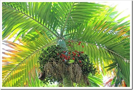 130713_TropicalGardensOfMaui_062